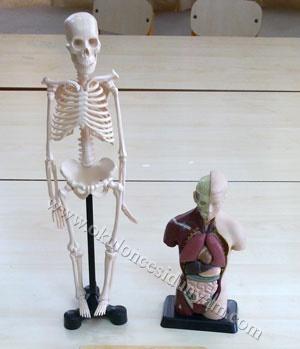 okul-öncesi-dünyam-organ-önlüğü