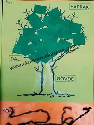 Ağacın Kısımları Okul öncesi Dünyam