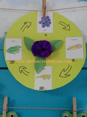 okul öncesi kurbağa etkinlikleri