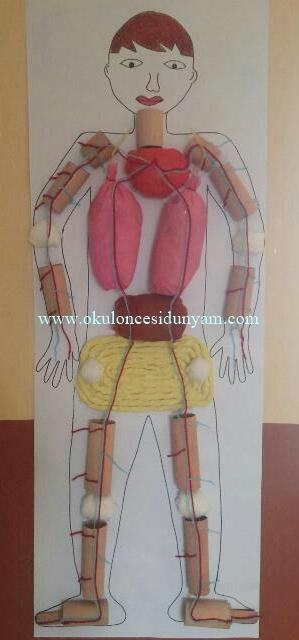 okul öncesi insan vücudu
